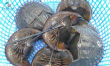 Bán sam biển nguyên con giao sống tận nơi TPHCM