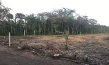 Bán đất chính chủ (đất nông nghiệp)