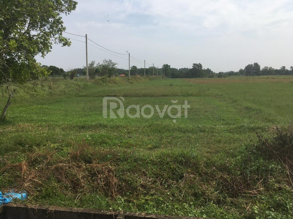 Bán 1000m2 đất xã Thái Mĩ huyện Củ Chi giá 800tr SHR.