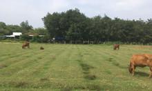 Bán đất biệt thự vườn giá rẻ xã Nhuận Đức huyện Củ Chi 2500m SHR
