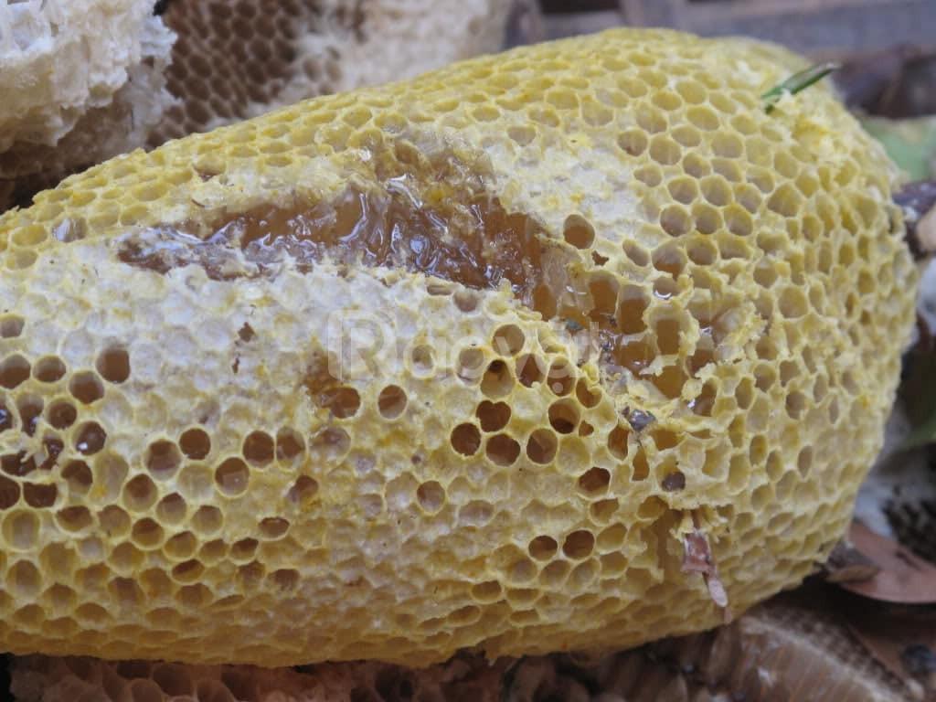 Bán mật ong rừng ( ong ruồi ) còn nguyên bọng sáp
