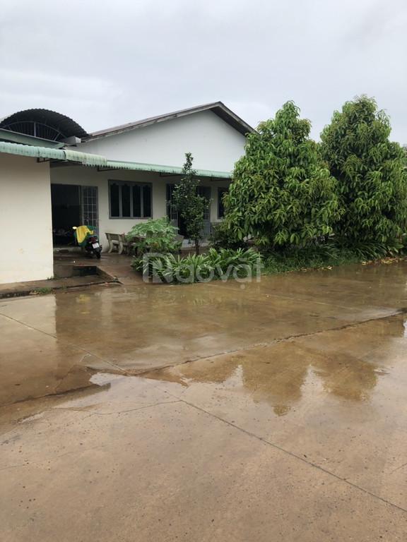 Cho thuê nhà xưởng hoặc kho chứa hàng tại xã Tân Hưng, Đồng Phú