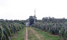 Vườn thanh long 3,8 Mẫu, 3300 trụ Tân Lập, HTN