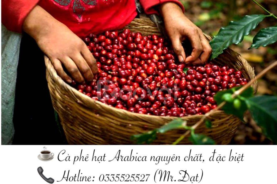 Hạt cà phê sạch, uy tín, chất lượng cao (ảnh 1)