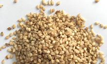 Chuyên bán hạt mè trắng nhập khẩu số lượng lớn tại Tp.HCM