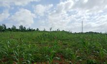 Bán 2,3ha đất cho khách đầu tư làm trang trại, resort Khánh Hòa