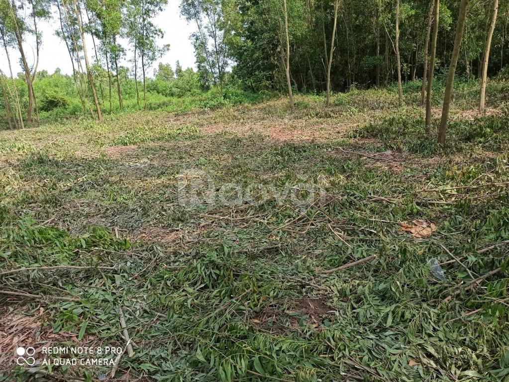 Gia đình cần sang lại đất vườn mặt tiền đường nhánh Tỉnh Lộ 7