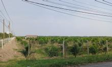 Cần bán gấp đất mặt tiền đất vườn đường nhựa Cây Trôm