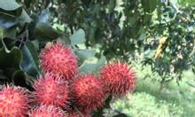 Cườn trái cây măng cụt , sầu riêng... sổ hồng chính chủ