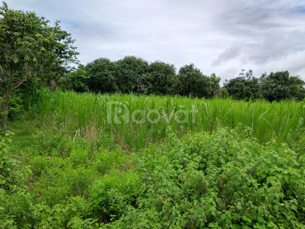 Bán lô đất vườn 1000m2 tỉnh lộ 7 giá 1tỷ3, sổ hồng riêng.