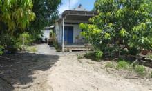 Địa ốc xanh nam bộ bán gấp nhà đất, Phước Hòa, Phú Mỹ,BR-VT,51