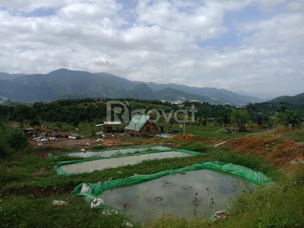 Bán 23000m đất trồng cây lâu năm Diên Khánh Khánh Hòa