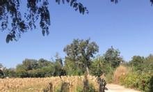 Bán gấp lô đất ở Ea Kao, Buôn Ma Thuột – đất đẹp, giá tốt
