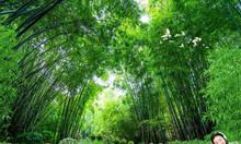 Gạch tranh phong cảnh thảo nguyên