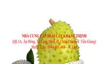 Mãng cầu xiêm xuất khẩu - Tiền Giang