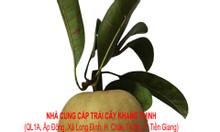 Sapô (Hồng xiêm) – Vĩnh Kim, Tiền Giang
