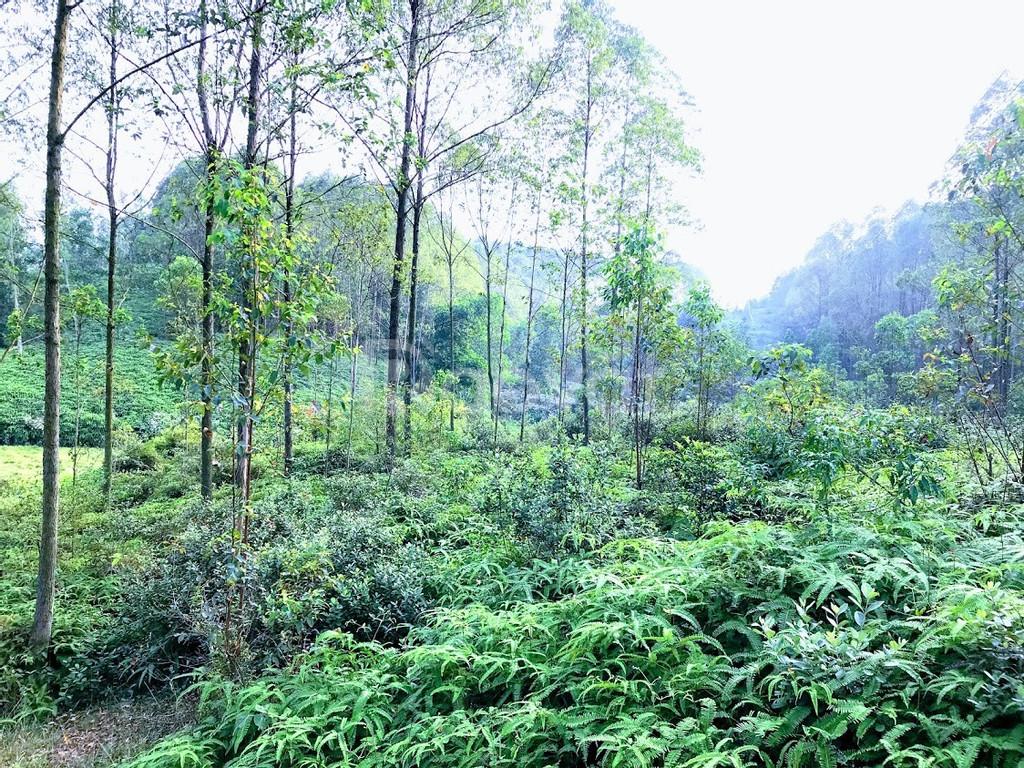 Cần bán 3ha=33000m đất tại Minh Đức Phổ Yên