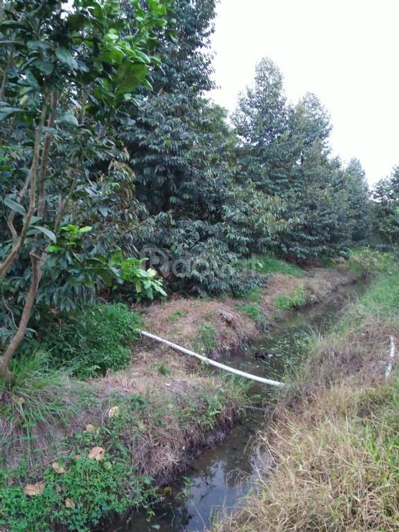 Bán gấp 3000m2 đất tại Kim Sơn, Châu Thành, giá tốt