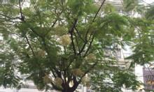 Bán gấp nhà phố khu Hưng Phước, Phú Mỹ Hưng 5 tầng 7 PN