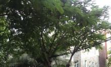 Bán khách sạn cao cấp 16 phòng, Phú Mỹ Hưng, Quận 7