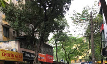 Bán nhà mặt phố Hoàng Ngọc Phách vỉa hè rộng