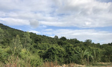 Cần bán gấp 24.066 m2 đất rừng Diên Sơn, Diên Khánh