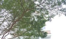 Cty Địa Ốc Nhà Xinh SG mở bán 10 căn nhà + biệt thự kđt Five Star