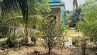 Cần bán đất trồng cây giá yêu thương cho nông dân huyện Bến Lức (ảnh 1)
