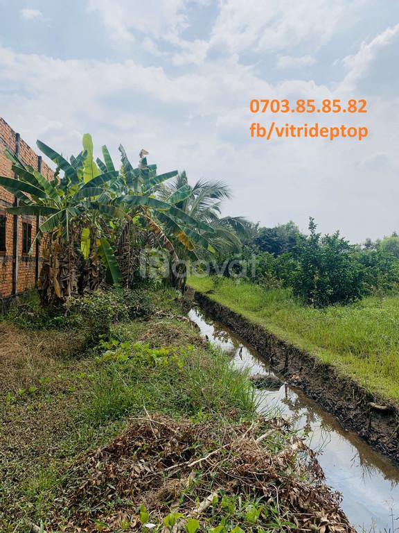 Cần bán đất trồng cây giá yêu thương cho nông dân huyện Bến Lức (ảnh 3)