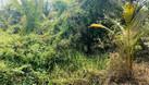 Cần bán đất trồng cây giá yêu thương cho nông dân huyện Bến Lức (ảnh 5)
