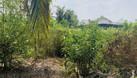 Cần bán đất trồng cây giá yêu thương cho nông dân huyện Bến Lức (ảnh 6)