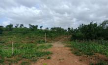 Bán 2,3ha đất trồng cây lâu năm Diên Hòa gần đường Cao Bá Quát