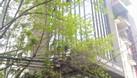 Cho thuê văn phòng mặt tiền 8m gần Đại Học Ngoại Thương (ảnh 4)
