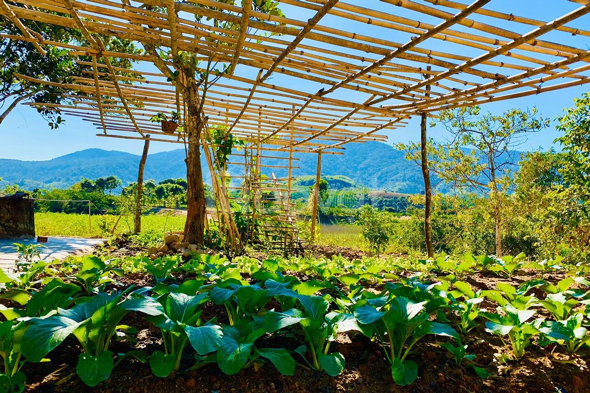Top 6 yếu tố khiến thị trường bất động sản nông nghiệp sẽ bùng nổ tron