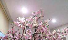 Cây hoa mộc lan giả