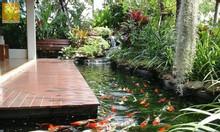 Thiết kế hồ cá koi,thiết kế bể lọc hồ cá