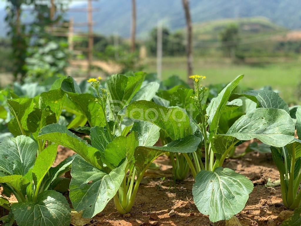 Farmstay – mô hình du lịch độc đáo, hấp dẫn