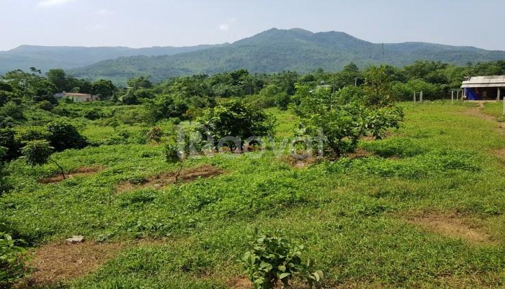 Bán đất Lương Sơn, Hòa Bình, 2500m2 có ao, có suối bám đất, giá rẻ