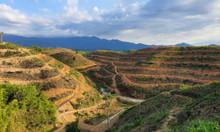 Trồng sầu riêng Monthong Thái mang đến những lợi ích kinh tế - xã hội