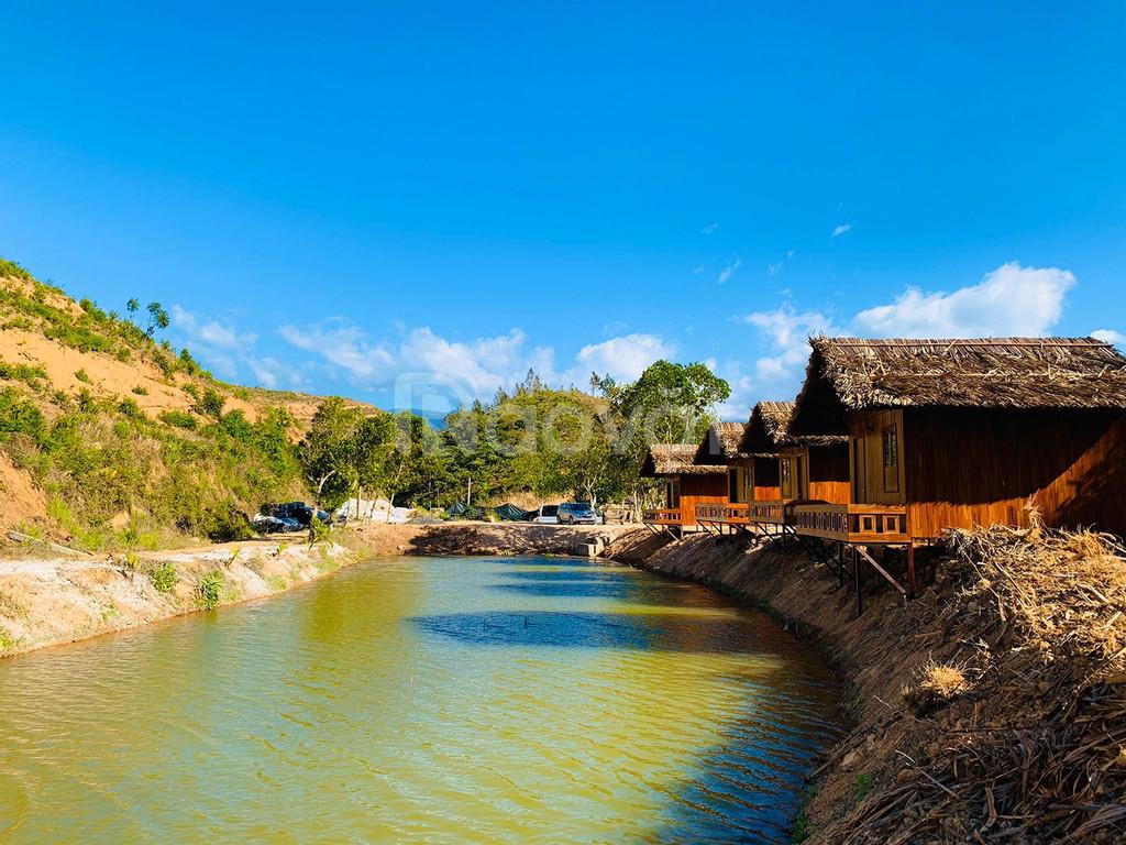 Cây sầu riêng – viên ngọc quý của Trang trại Tân Lâm Nguyên
