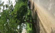 Bán gấp lk 25 mặt đường Ngô Thị Nhậm Hà Đông kinh doanh tốt