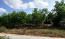 Bán đất thôn Bắc, xã Ninh Tân, Ninh Hòa, Khánh Hòa, thích hợp phân lô