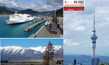 New Zealand – đất nước đáng sống và du học