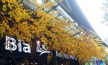Cây hoa mai giả tại Hà Đông