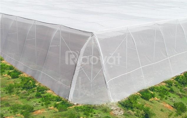 Nhà lưới bình minh,lưới chắn côn trùng politiv,công ty sản xuất