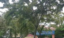 Bán 4 lô đất nền đẹp đã có sổ hồng tỉnh lộ 10 Tân Tạo, Bình Tân.