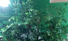 Cây lá xanh giả tại Hải Phòng