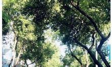 Bán đất góc 2 mặt tiền hẻm 71 Nguyễn Văn Linh Quận 7, giá 11.25 tỷ