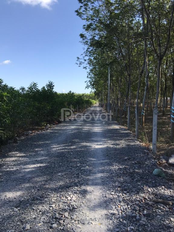 Bán 1 mẫu đất sau UBND Tân Hiệp, Long Thành giá 18 tỷ