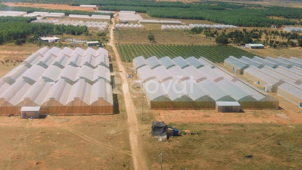 Đất rẻ tiềm năng, mua ngay kẻo lỡ. Đầu tư 65-91 nghìn/m2, sổ riêng chí